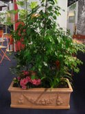 FOIRE INTERNATIONALE DE BORDEAUX location plantes frect9035120140