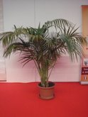 FOIRE INTERNATIONALE DE BORDEAUX location plantes kentia180200