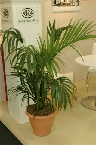 FOIRE INTERNATIONALE DE BORDEAUX location plantes kentia230250